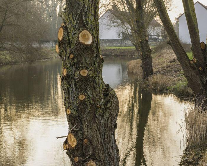 m.dearing-la-01-l-arbre-devant-l-etang-d81b0931c31cc4ce53e49ac2ff99f1ef