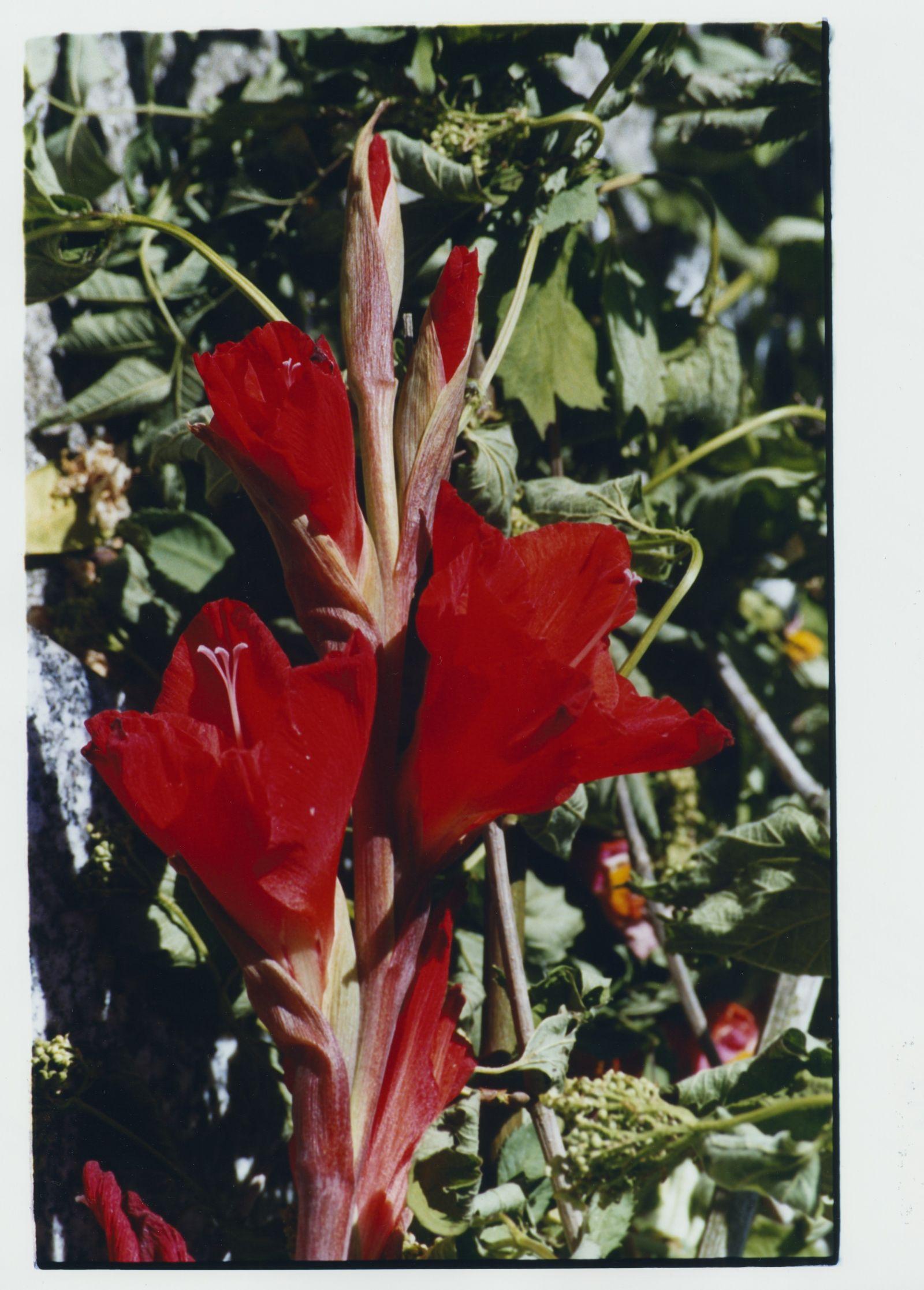 210623-visuel-expo-fleurs-rouges-09dc111b9ee92bcc778de771fafd4723